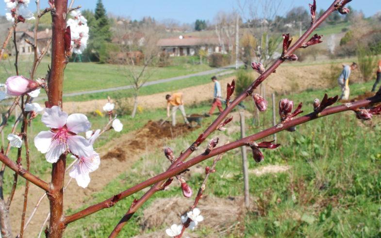 C'est le printemps, le verger a besoin de nous !