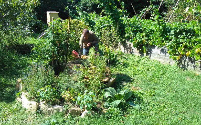 Des nouvelles du jardin cet été et à l'automne 2018